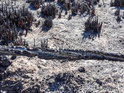Danni dell'incendio e Posada