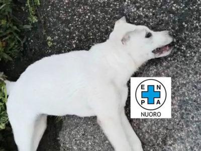 Il cucciolo avvelenato a Nuoro