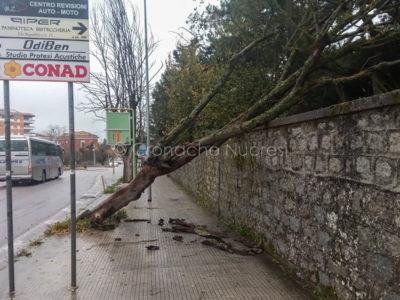 Nuoro, uno degli alberi abbattuti