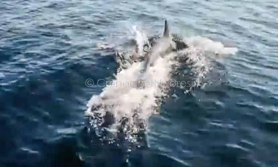 Uno dei delfini nelle acque di Porto Torres