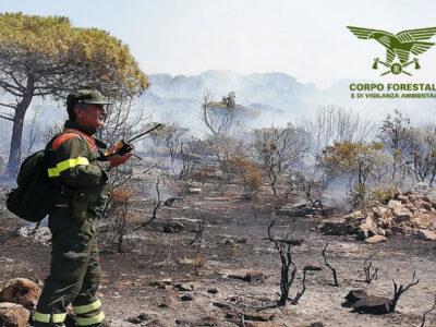 Incendio nelle campagne di Luogosanto