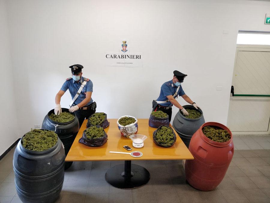La marijuana sequestrata