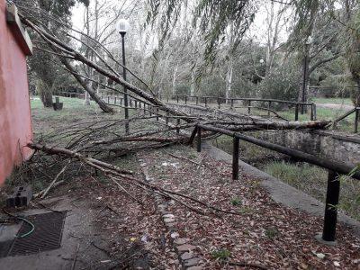 Alberi sradicati nel parco di Sant'Antioco a Scano Montiferro