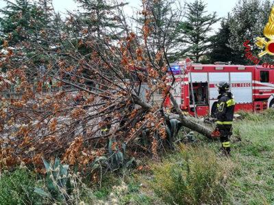 I Vigili del fuoco mettono in sicurezza un albero divelto dal vento