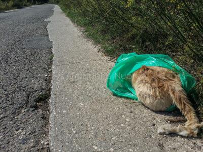 Il gatto morto gettato a bordo strada (foto S.Novellu)