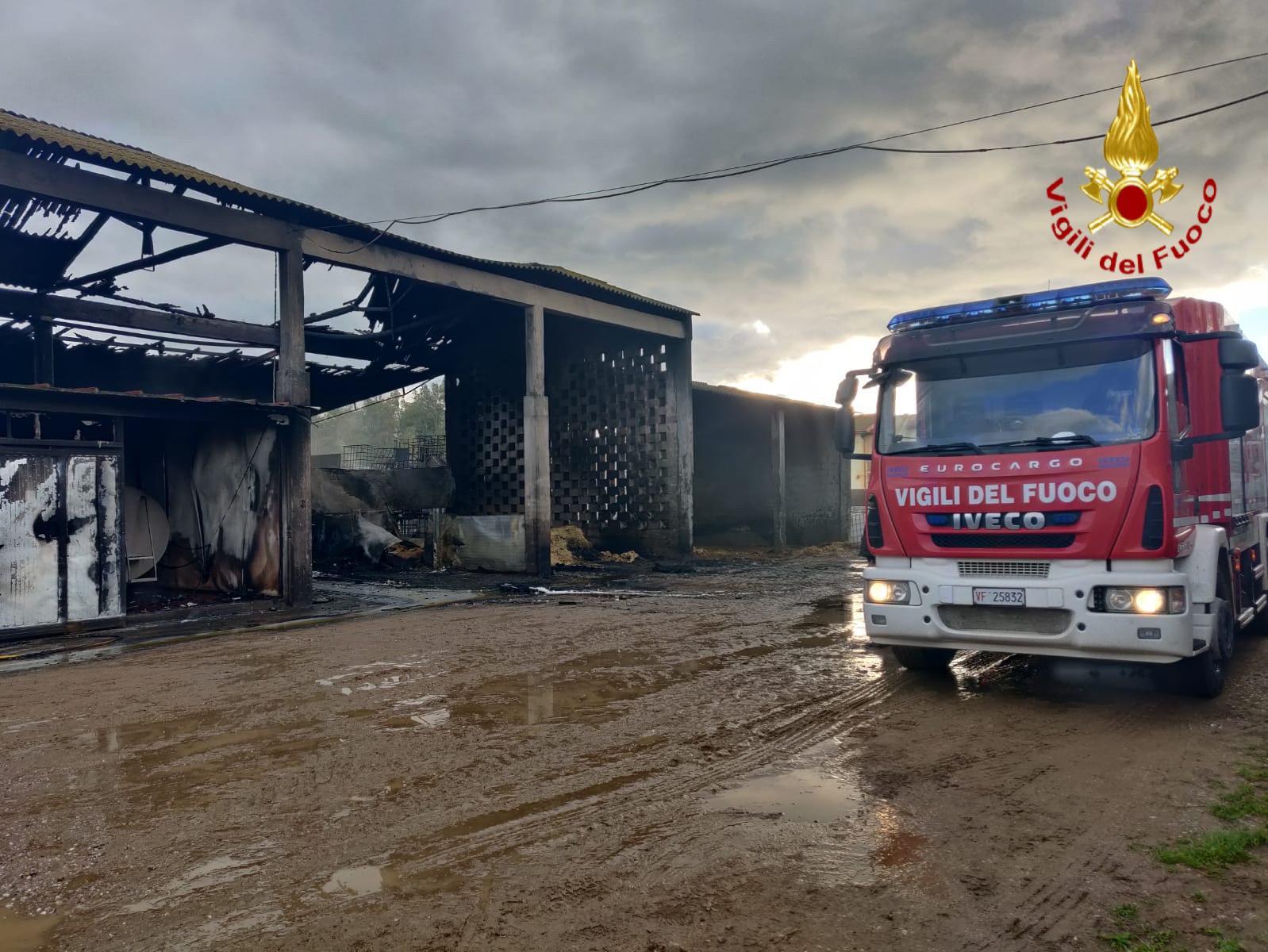 Incendio in azienda zootecnica, morti 20 capi di bestiame