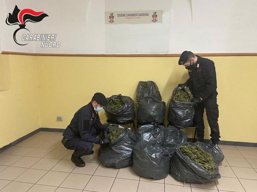 Lanusei. 14 chili di marijuana nascosti in un torrente