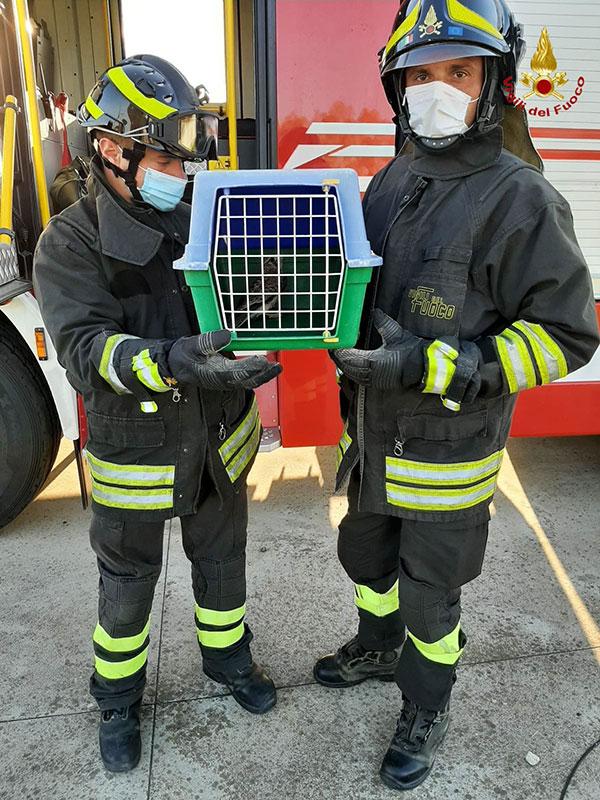 I Vigili del fuoco con il volatile appena liberato