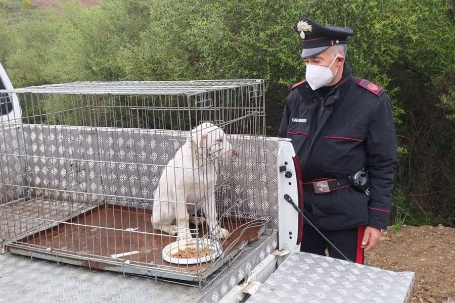 Teneva un cagnolino legato con un peso da un chilo al collo: 68 enne denunciato per maltrattamenti