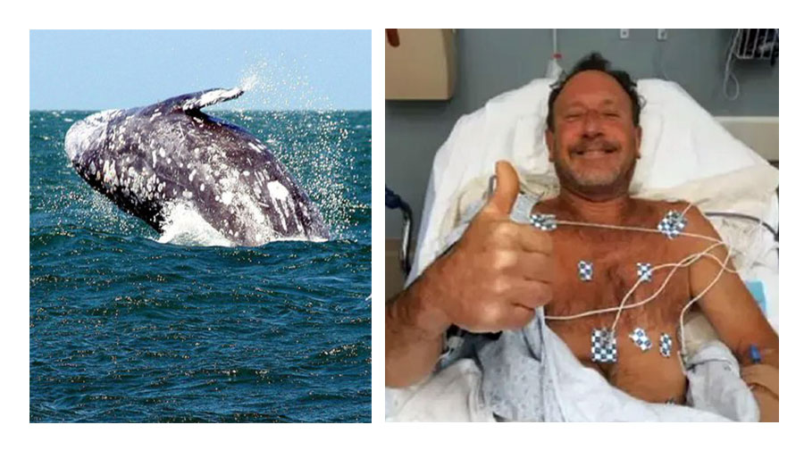 Pescatore di aragoste inghiottito da una balena: salvo per un colpo di tosse del cetaceo