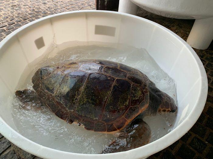 Aveva ingerito particelle di plastica: tartaruga Caretta Caretta salvata a Cala Luna