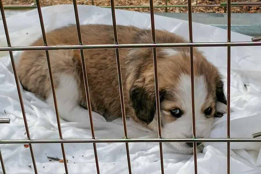 Nuoro.Il veterinario dell'ASSL va in ferie: in tilt sterilizzazioni e adozioni dei cani