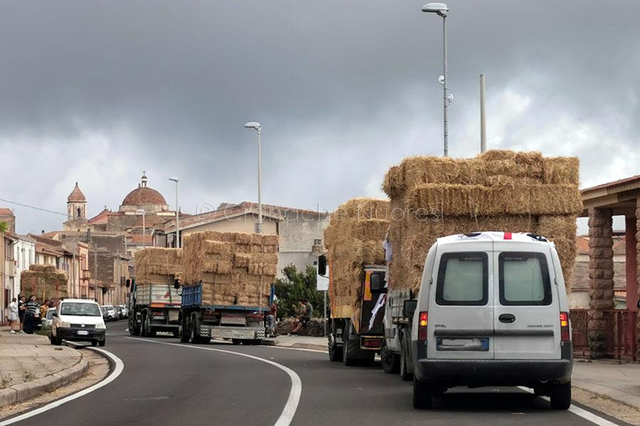 Il grande cuore della Sardegna dopo il fuoco. A Tresnuraghes continuano le donazioni di fieno e mangimi