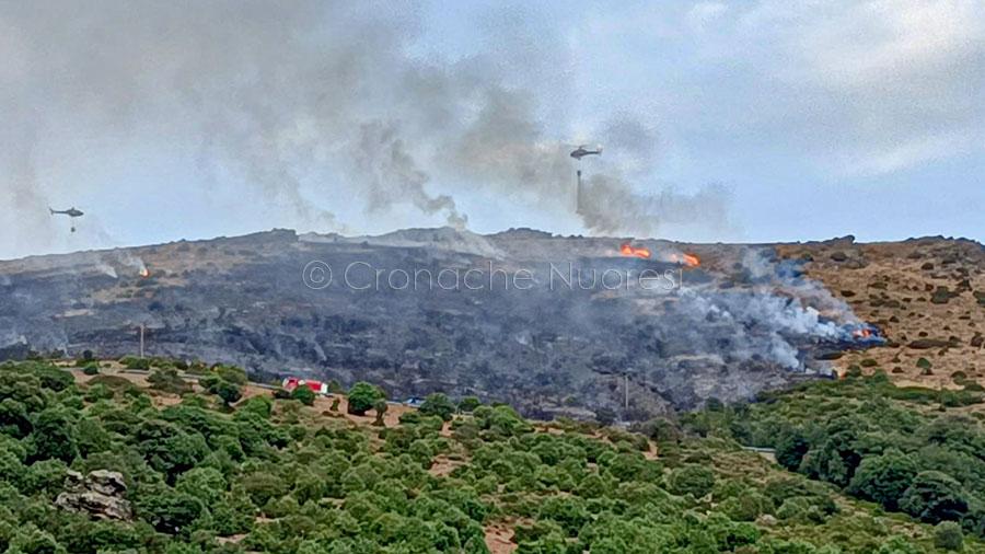 Incendi. A fuoco le campagne di Villagrande Strisaili: in campo Forestale e Forestas