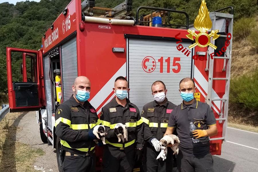 Allarme per cuccioli gettati in una scarpata: li salvano i Vigili del fuoco